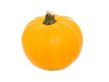 Pumpkin on white background Royalty Free Stock Photos