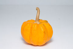 Pumpkin. On a white background Stock Image