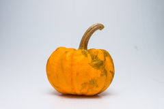 Pumpkin. On a white background Royalty Free Stock Image
