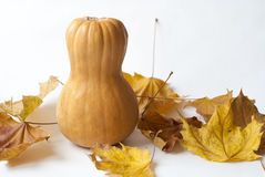 Pumpkin on a white background with autumn leaves Stock Image