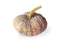 Pumpkin on white background. Isolate royalty free stock photos