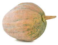 Pumpkin on white background Stock Images