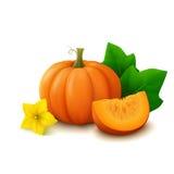 Pumpkin on white background stock illustration
