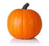 Pumpkin on white Stock Image