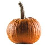 Pumpkin on white Stock Photos