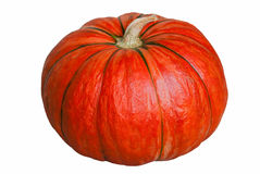Pumpkin on white. Royalty Free Stock Photo