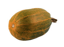 Pumpkin. The whole pumpkin on a white background stock image