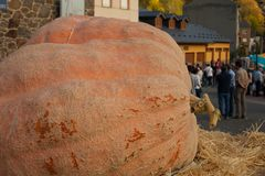 Gold medal pumpkin. Pumpkin winner of a contest in a little village of the north of spain with a total weight of about 400kg, igueña, leon Stock Images