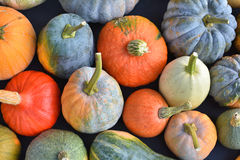 Pumpkin and winter squash. Varieties royalty free stock images