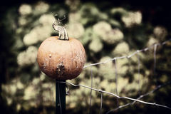 Pumpkin on a Wire Fence. Autumn Decor. A Pumpkin perched upon the post of a wire fence. Nostalgic processing stock images