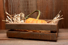 Pumpkin in Wood Crate Barn Royalty Free Stock Photography