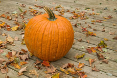Pumpkin on a wood deck Stock Image