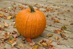 Pumpkin on a wood deck Stock Image