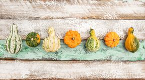 Pumpkin Wooden Background Harvest Thanksgiving. Pumpkin on Wooden Background. Harvest. Thanksgiving Royalty Free Stock Photos