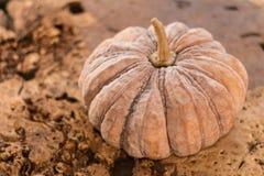 Pumpkin on wooden background stock photos