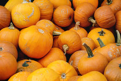 Pumpkin& x27; raccolto di s sul mercato Immagini Stock