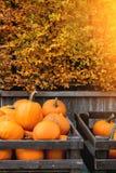 Pumpkin& x27; raccolto di s sul mercato Fotografia Stock