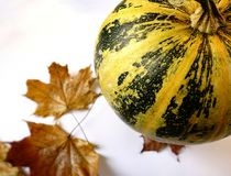 pumpkin maple leaves autumn still_life food healthy white background vegetable royalty free stock images