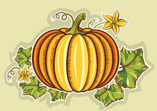 Pumpkin yellow fresh illustration isolated for des Royalty Free Stock Photo