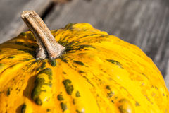 Pumpkin Stock Photo