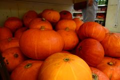 Pumpkin for your banner and brochure Royalty Free Stock Photography