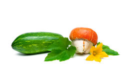 Pumpkin and zucchini isolated on a white background close-up Stock Image