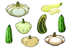 Pumpkin, zucchini and pattypan squash Stock Image