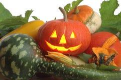 Pumpkin3 Stock Foto