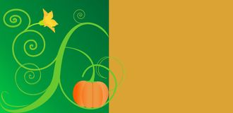 Pumpkinbloom Stock Photo