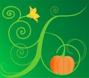 Pumpkinbloom Stock Abbildung