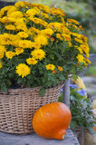 Pumpking and flowers  Stock Image