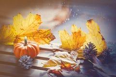 Pumpking and maple leaves near rainy window. Autumn season concept Royalty Free Stock Image