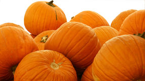 Pumpking Pile 2 White BG Stock Images