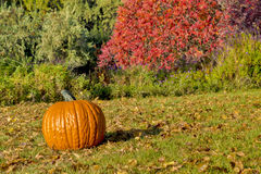 Pumpking and red bush on grass Royalty Free Stock Photography