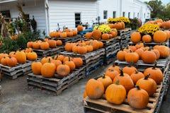 Pumpking-Sammeln für Halloween lizenzfreie stockfotos