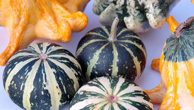 Pumpkins 1 Stock Images