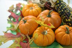 Pumpkins 1. Pumpkins and indian corn with autum leaves royalty free stock photos