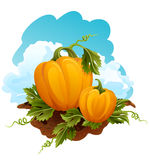 Pumpkins stock illustration