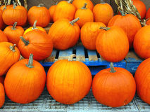 Pumpkins. A group of pumkins in a row stock photography