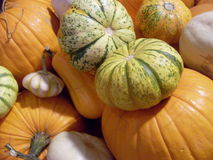 Pumpkins. Very interesting pumpkins in the market Royalty Free Stock Images