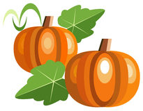 Pumpkins. Illustration of stylized pumpkins with leaves Royalty Free Stock Image