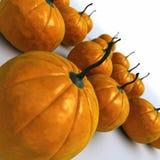 Pumpkins. Tilt view of a lot of orange pumpkins Royalty Free Stock Photography