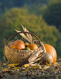 Pumpkins Stock Image