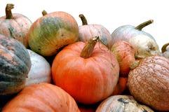 Pumpkins. Orange pumpkins in the garden Royalty Free Stock Photography