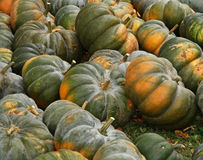 Pumpkins. On bavarian market on thanksgiving Stock Photography