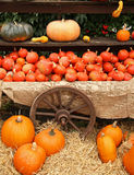 Pumpkins. On bavarian thanksgiving market Stock Photo