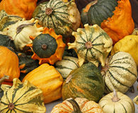 Pumpkins. On bavarian thanksgiving market Royalty Free Stock Photography