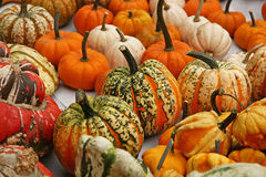 Pumpkins. On bavarian thanksgiving market Stock Images