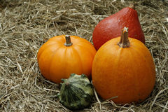 Pumpkins. Orange, red and green pumpkins on straw Stock Photo
