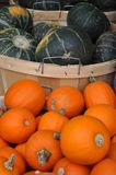 Pumpkins. A lot of red pumpkins on street market red and green Royalty Free Stock Photos
